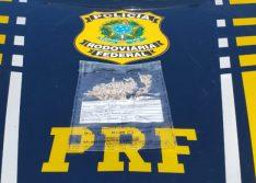 Motorista é preso após ser flagrado transportando crack em Picos