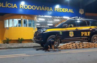 Passageira é presa com maconha avaliada em R$ 30 mil em Floriano