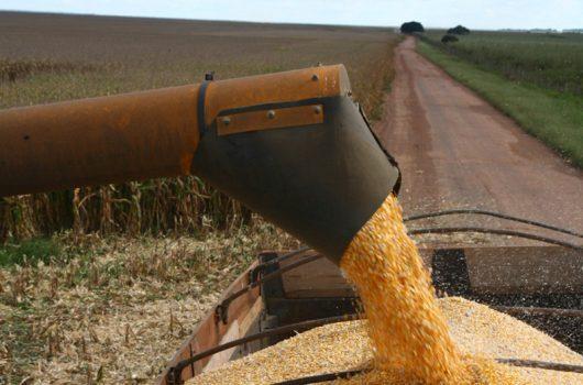 Produção de grãos no Piauí deve crescer cerca de 10% em 2021, aponta IBGE